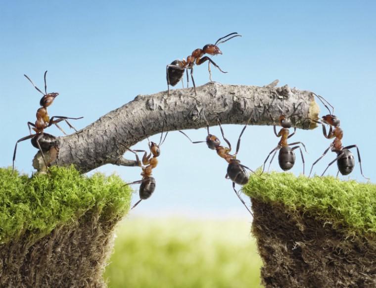 ants2-Istock